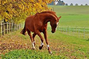 Combien De Chevaux : avoir un cheval combien a co te ~ Medecine-chirurgie-esthetiques.com Avis de Voitures