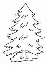 Pine Coloring Trees Tree Under Clip Simple sketch template