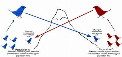 Flow Gene Genes Population Mess Allowing Another