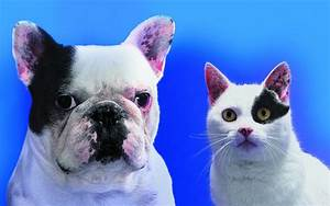 Wallpaper Collections: Funny Cats & Dogs Wallpapers