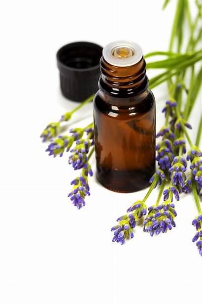 Aromatherapy Skin Lavender Allergy Remedies Oil Essential
