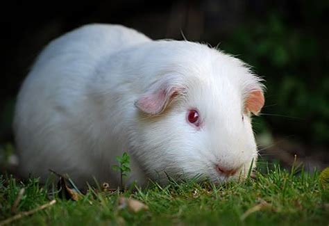 Albino, Wildlife And Animal