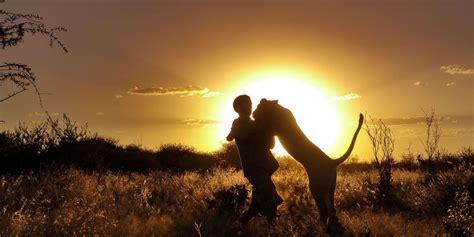 sauvee de la mort au botswana sirga la lionconne adoptee