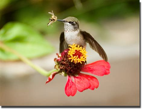 death by hummingbird blue ridge blog