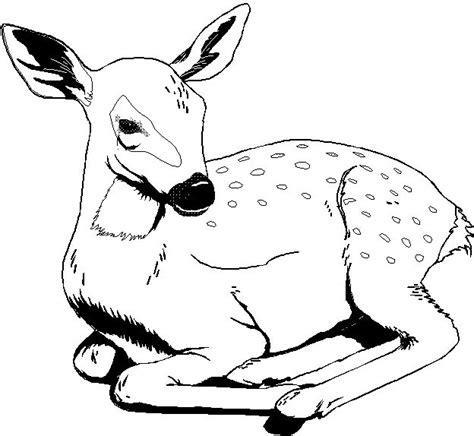printable  wild animal coloring pages  coloring