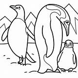 Coloring Penguins Pages Penguin Animal sketch template
