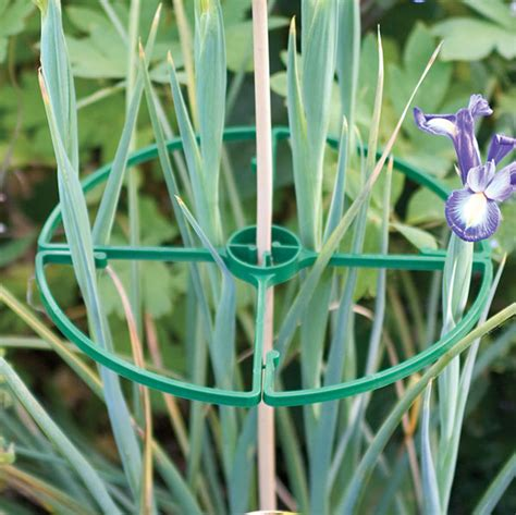 tenax flower support rings  pack plant support trellis