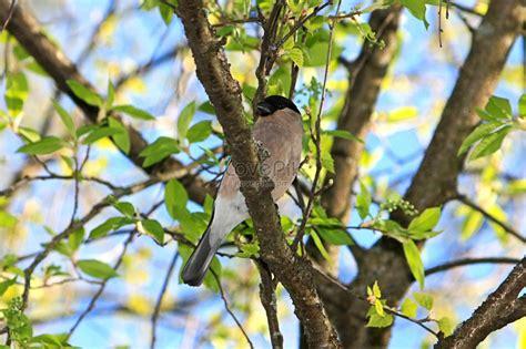 paling bagus 26 gambar burung di pohon