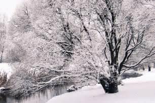 tree in winter digital deconstruction