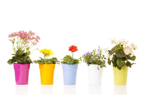 pictures of potted flowers potted flowers photograph by alexey stiop