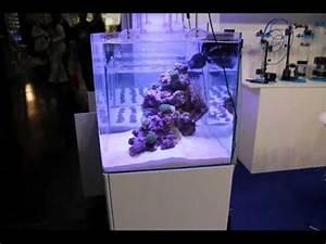 Blau De Verzichtserklärung : blau aquaristic en interzoo 2012 youtube ~ Eleganceandgraceweddings.com Haus und Dekorationen