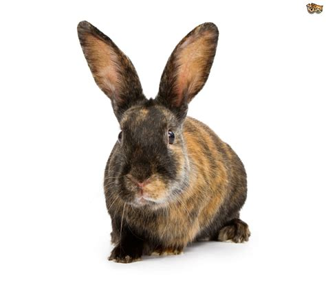 rabbit breeds 5 of the best rabbit breeds for children pets4homes