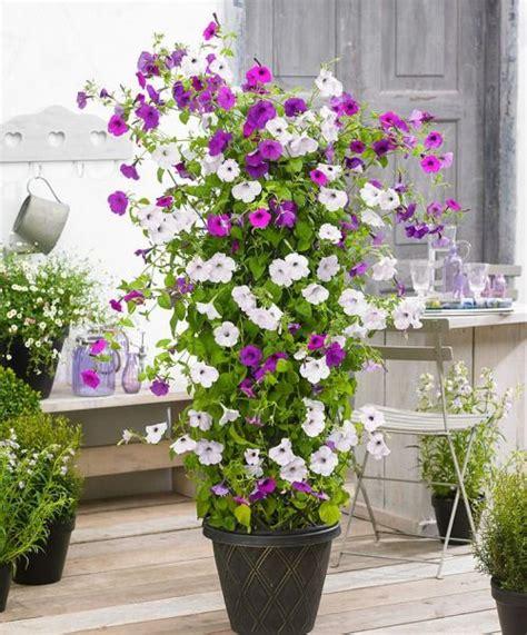 Potted Climbing Petunias  Flower Garden Inspiration