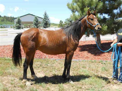 horse dumb baker kim friends healing horses biostar rotational accupressure diets hitm reads intro edward whole league