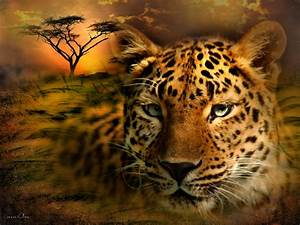 maom's imagery: African Leopard