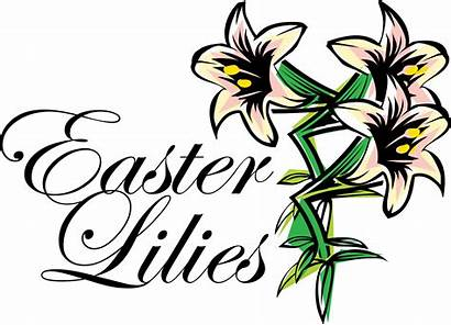 Easter Lily Lilies Clipart Clip Cross Drawing