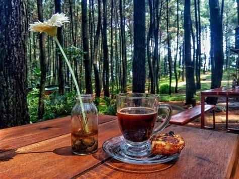 wisata alam gunung pancar hutan pinus  asyik  bisa