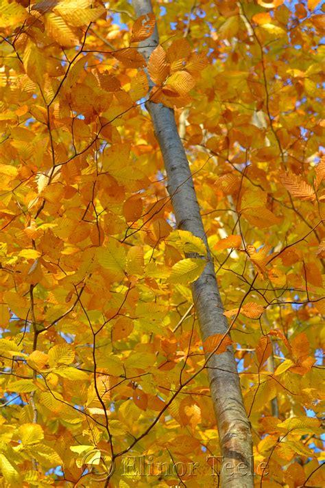fall foliage goose cove reservoir gloucester ma