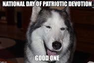 Meme Funny Husky Dogs : Best 25 ideas about husky meme find what you'll love