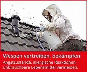 Wespen In Der Wohnung : wespen was hilft gegen wespen wespenfeuerwehr ~ Whattoseeinmadrid.com Haus und Dekorationen