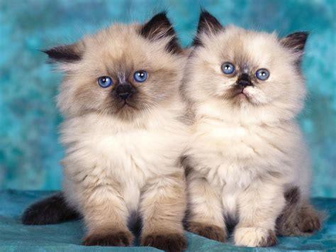 best cats cats best 2