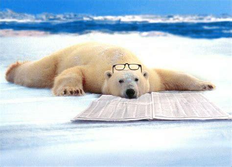 Polar Bear Nap Funny Father's Day Card