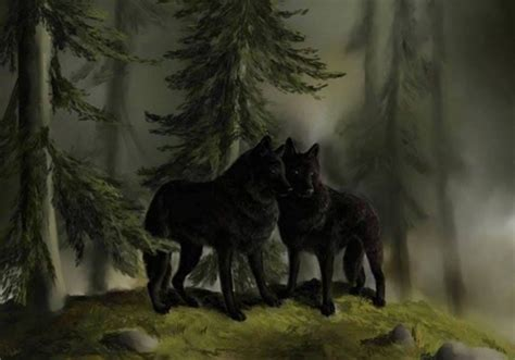 black wolves  animals background wallpapers