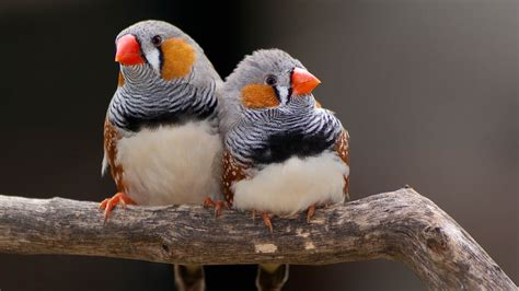 what birdsong can teach us about creativity
