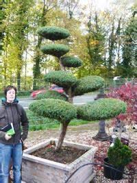Zwergflieder Auf Stamm : garten bonsai g nstig bestellen baumschule newgarden ~ Lizthompson.info Haus und Dekorationen