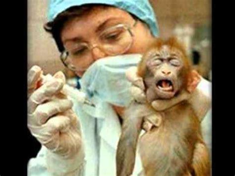 animal testing   gov class youtube