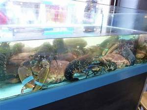Fish tank with live crabs & lobster - Picture of Le ...