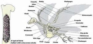 20 Best Bird Anatomy Images On Pinterest