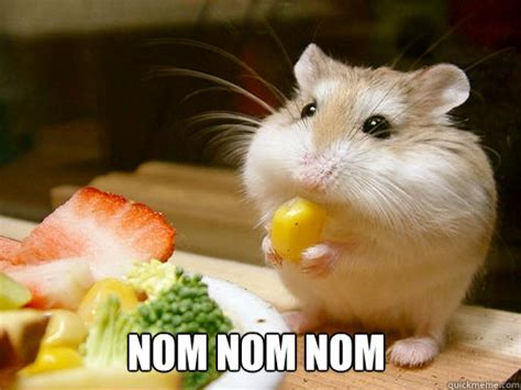 Nom Nom Nom Meme - nom nom nom hamster memes quickmeme