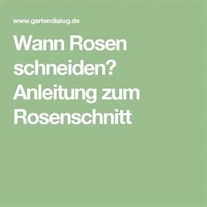 Hortensien Wann Schneiden : die besten 25 rosen schneiden ideen auf pinterest rosen ~ Lizthompson.info Haus und Dekorationen