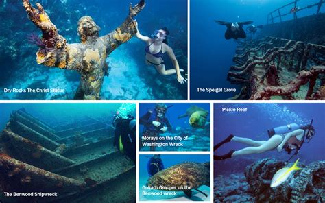 scuba diving   florida keys
