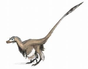 File:Velociraptor dinoguy2.jpg - Wikipedia  Velociraptor