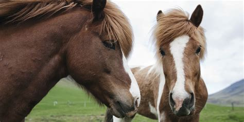 domestication horse ancient horses dna huffpost