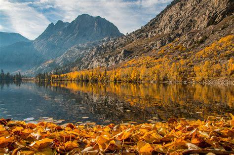 fall colors peak  yosemite eastern sierra  week