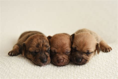 baby puppies newborn puppy photoshoot for foster dogs people com