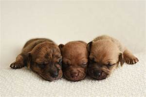 Newborn Puppy Photoshoot for Foster Dogs | PEOPLE.com