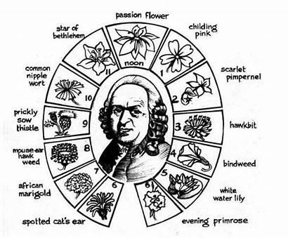 Linnaeus Carl Clock Books Floral Flower Google