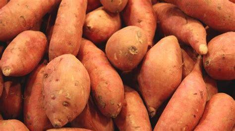 Cote Jardin- Patate douce -Jardinerie en ligne