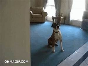 Happy Dog GIF - Find & Share on GIPHY