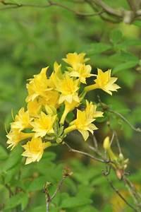 Les Fleurs Paris : fleur jaune 12 plantes fleurs jaunes pour toute l ~ Voncanada.com Idées de Décoration