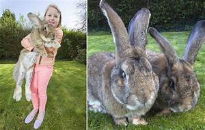 World's biggest bunny rabbit Darius, who weighs almost ...