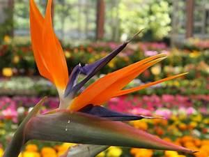 Gardenflora Trio: piante grasse giardinaggio piante e