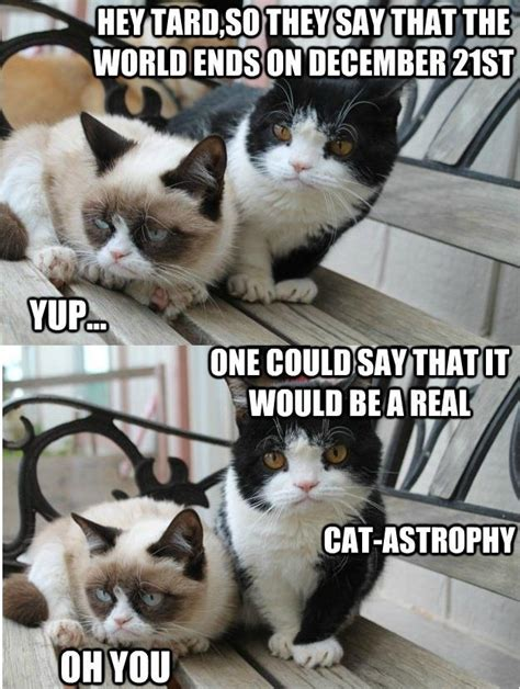 Tard The Cat Meme - tard the cat meme 28 images rmx tard the grumpy cat by freefreez meme center 17 best images