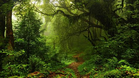 Green Forest Image by Sunlight In Green Forest 4k Ultra Hd Wallpaper