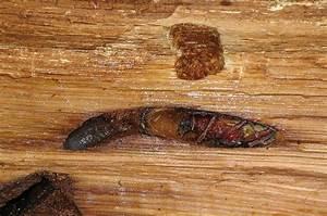 Traitement Bois Charpente : traitement des charpentes bois sur toulon cs couverture ~ Edinachiropracticcenter.com Idées de Décoration