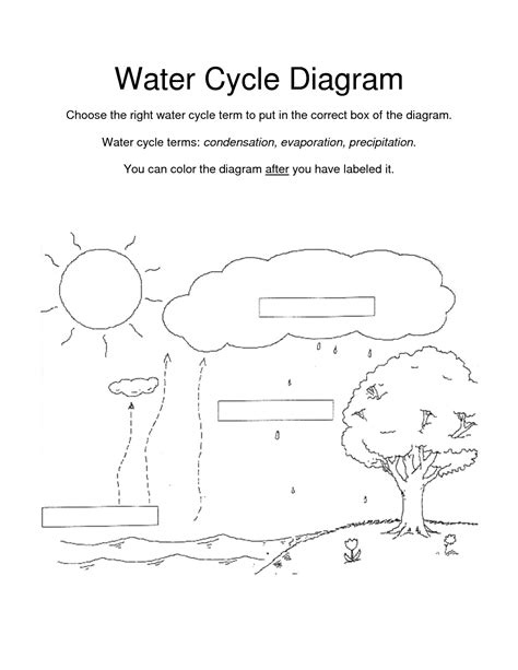 amazing   images  water cycle diagram blank